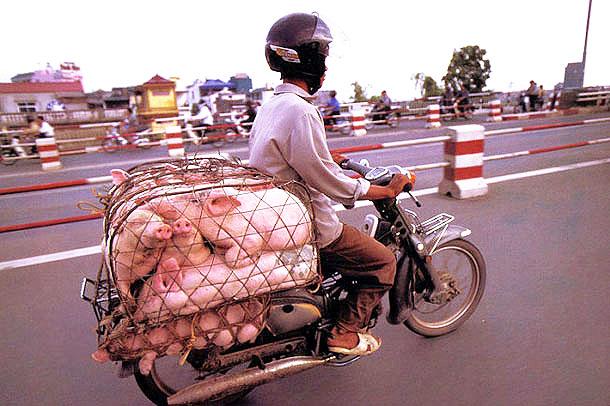 domuz-motor