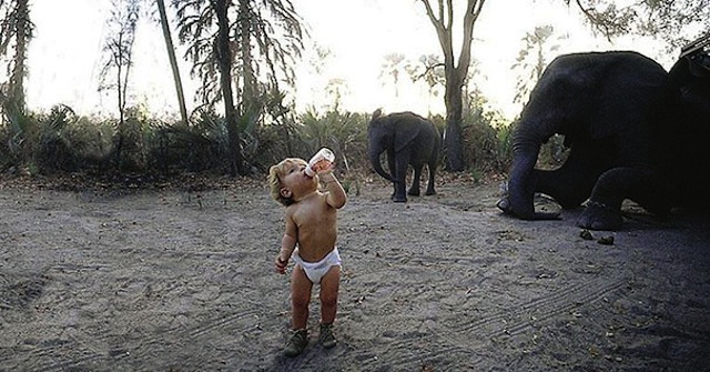 tippi-bebek