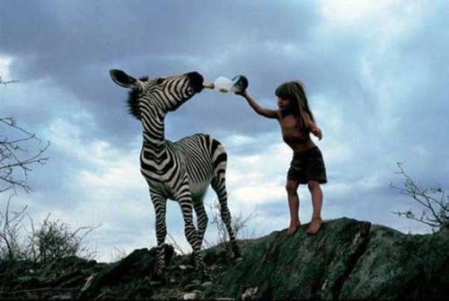 zebraya-sut-iciren-tippi