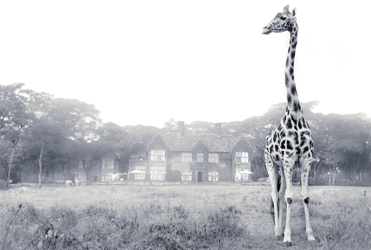 Misty morning at Giraffe Manor
