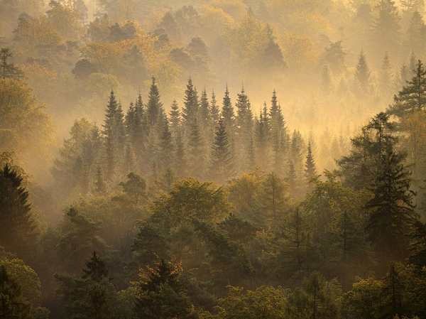 RHINELAND-ALMANYA