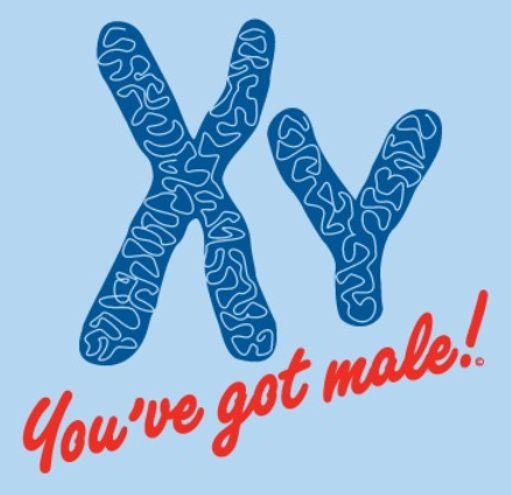 erkeksin-x-kromozomu