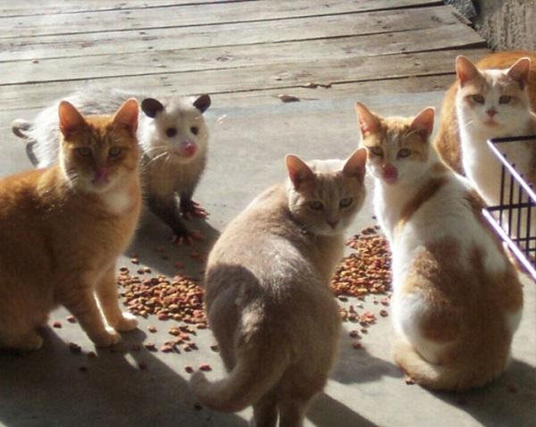 kedi-gibi-cek