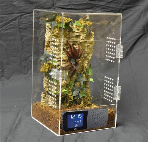tarantula-alarm-kafes