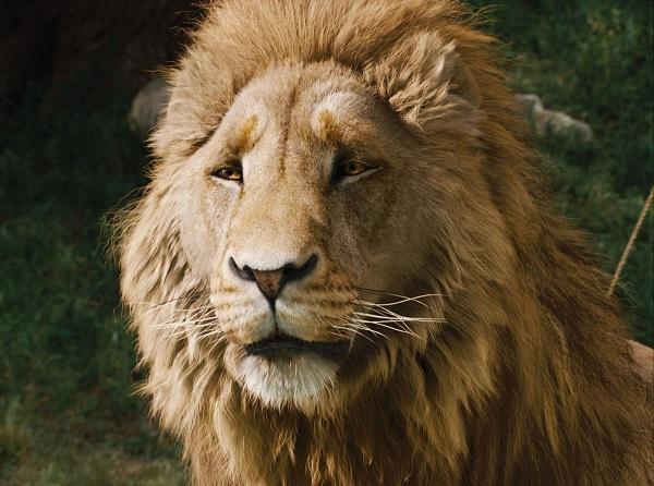 19-mayis-burc-yorumu-aslan