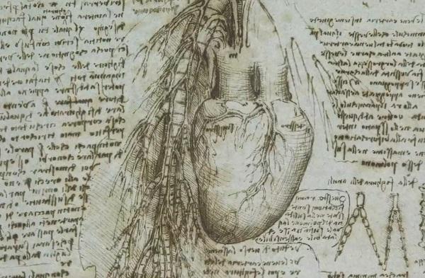 Papadan gizli anatomi calismalari-leonardo-da-vinci