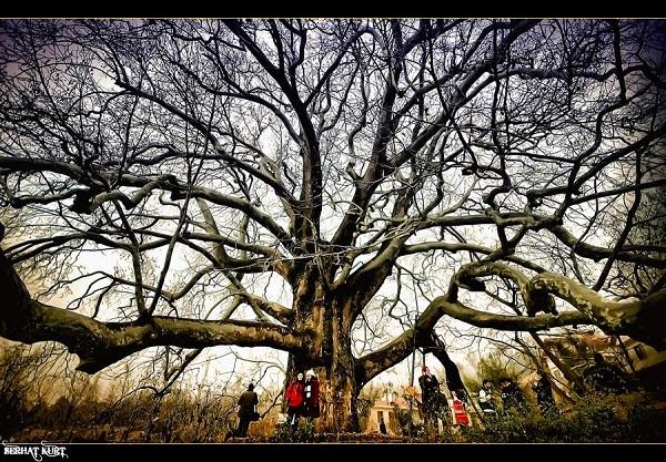 2f320cd664378 Baharın Geldiğini Hatırlatan 14 Ağaç ve Çiçek Temalı Şiir ...