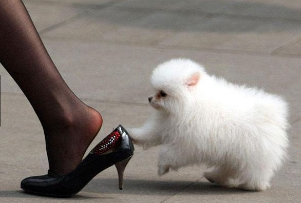 ayakkabilari-elde-tasimak-yasak