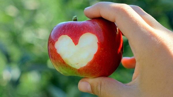 cemal sureya 14 elma