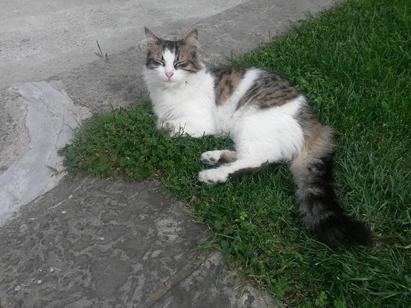 istanbul-kedileri-01