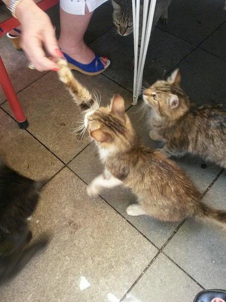 istanbul-kedileri-04