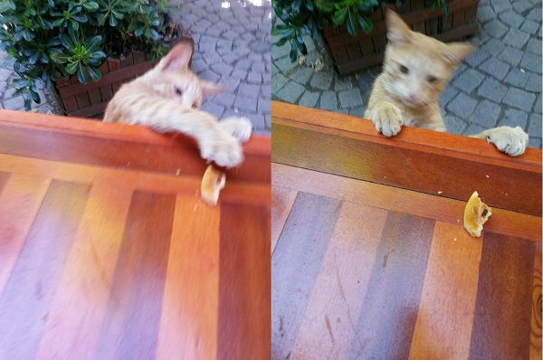 istanbul-kedileri-06