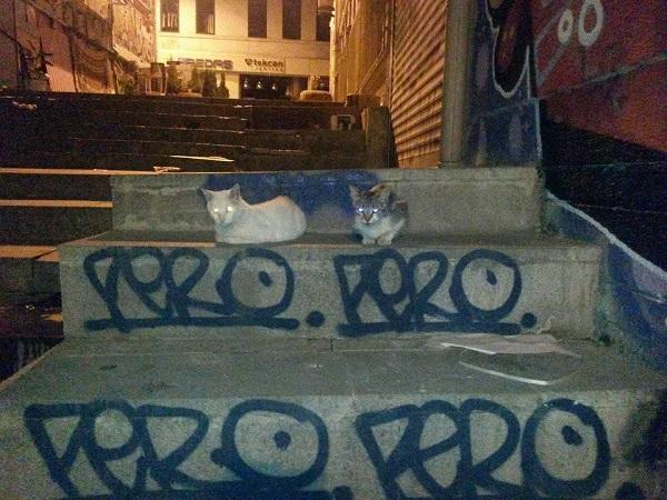 istanbul-kedileri-08