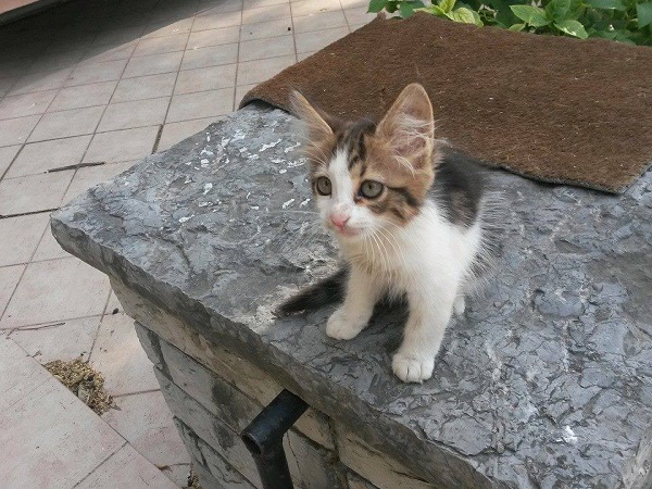 istanbul-kedileri-09