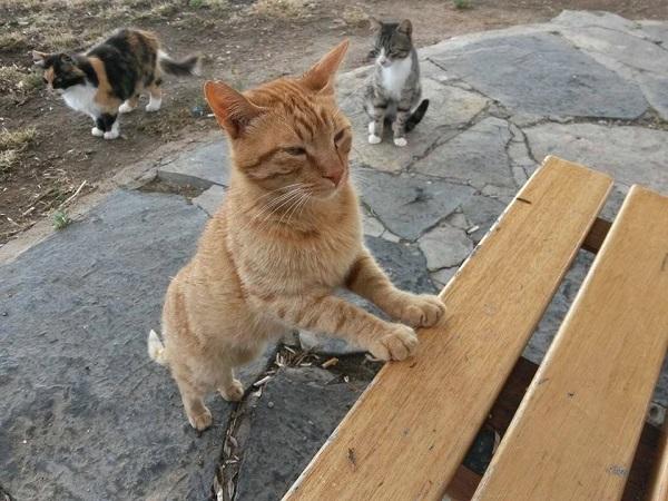 istanbul-kedileri-10