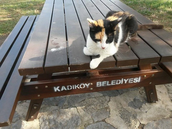istanbul-kedileri-11