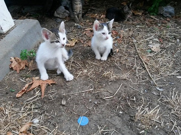 istanbul-kedileri-12