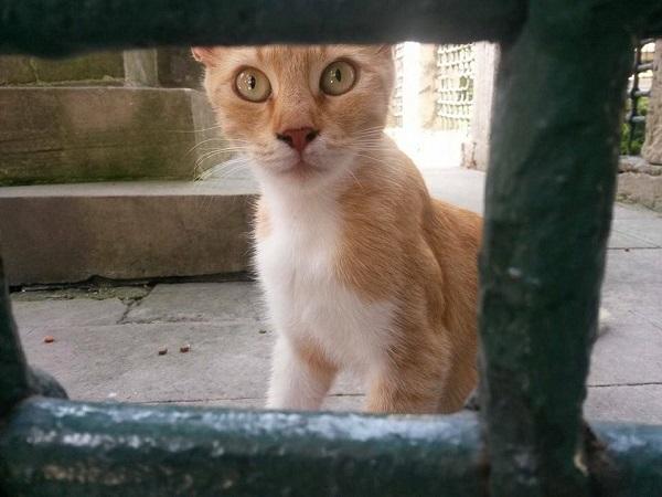 istanbul-kedileri-14