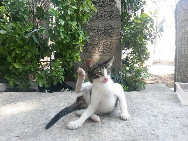 istanbul-kedileri-15