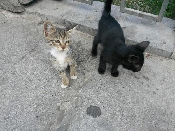 istanbul-kedileri-18