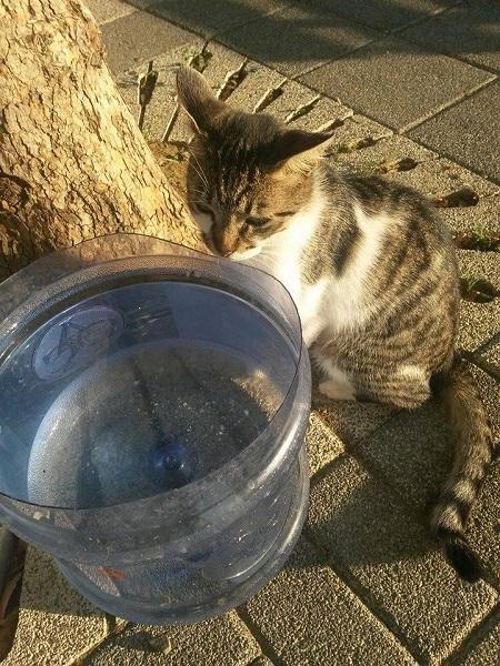 istanbul-kedileri-19