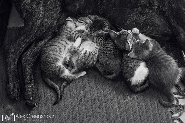 yavru-kediler-13