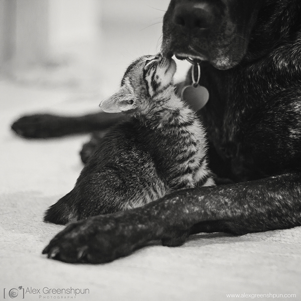 yavru-kediler-14