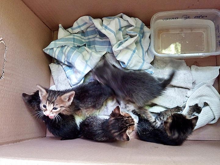 yavru-kediler-2