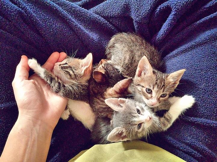yavru-kediler-3