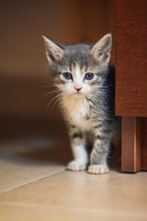 yavru-kediler-7