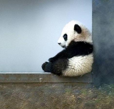 yeni-dogmus-panda