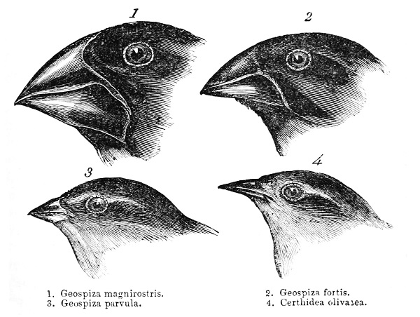 galapagos-adalari-10