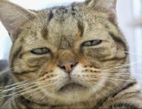 uykulu-kedi