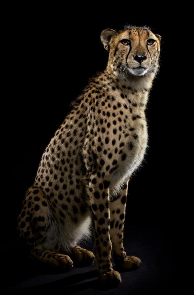 yabani-kedi-13
