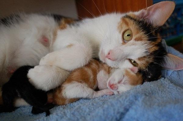 anne-kedi