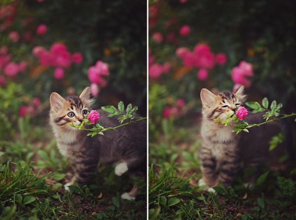 cicek-koklayan-kedi