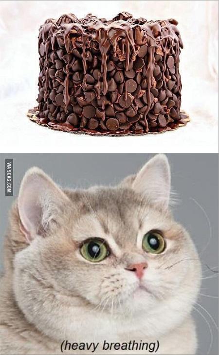 cikolatali-pasta-kedi