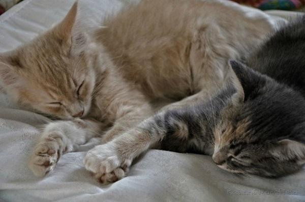 elele-uyuyan-kedi