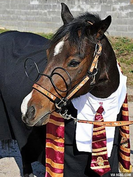 harry-potter-at