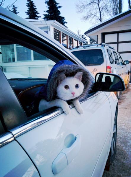 kardanadam-kedi