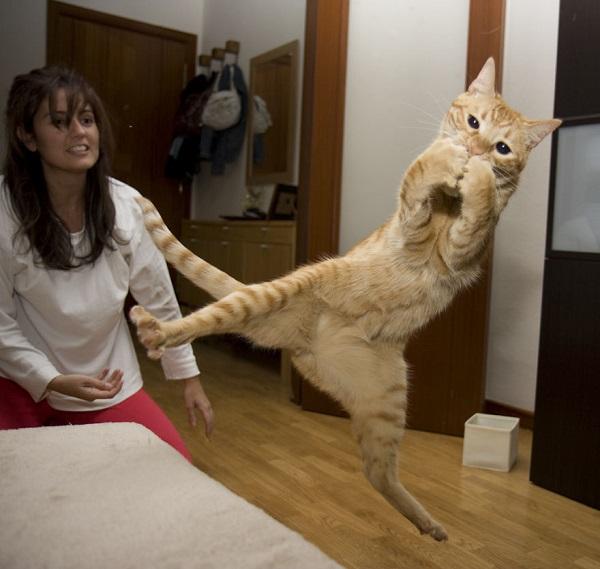 kedi-aksiyon