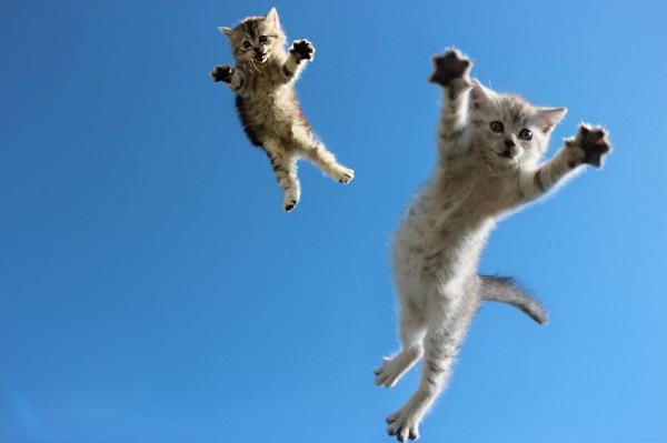 kedi-bebekler