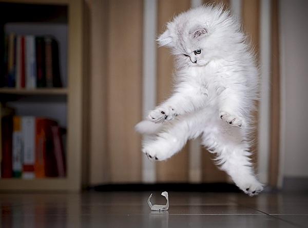 kedi-beyaz