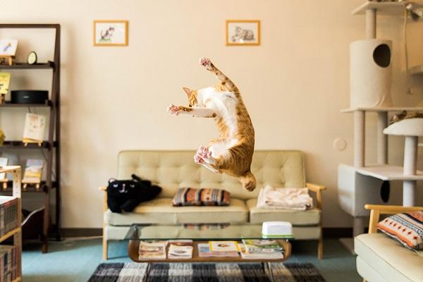 kedi-ev