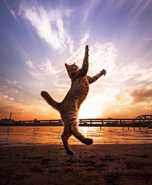 kedi-kumsal