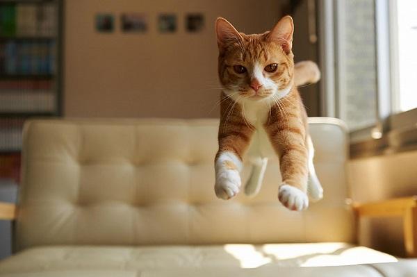 kedi-sarman