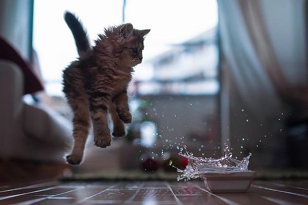 kedi-su