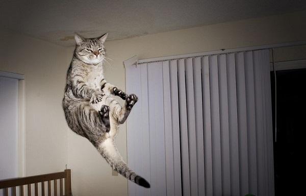 kedi-suratsiz