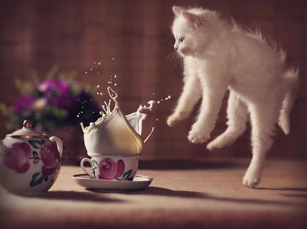 kedi-sut