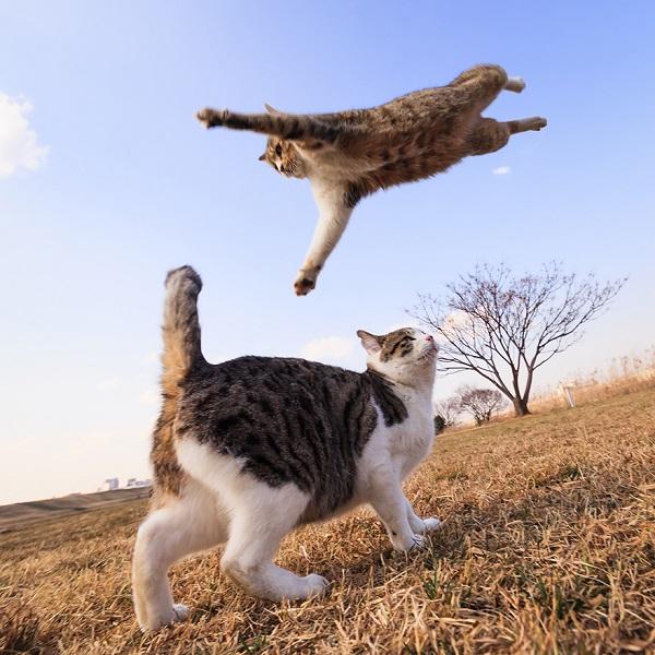 kedi-ucuyor